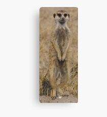 Meercat under Review Canvas Print