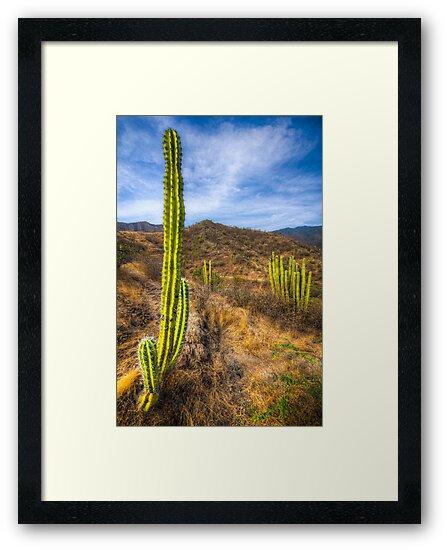 Sloughi Cactus Mountain by Alejandro  Tejada