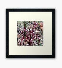 Blood spider Orchid (Caladenia filifera ) Framed Print