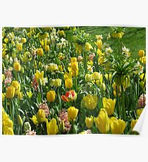 Golden Giants - Keukenhof Crown Imperials Poster