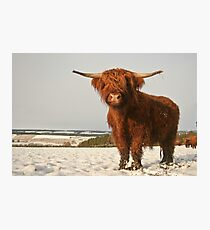 Highland Cow in Snow Photographic Print