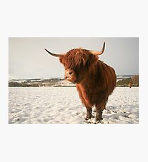 Snowy highland cow Photographic Print