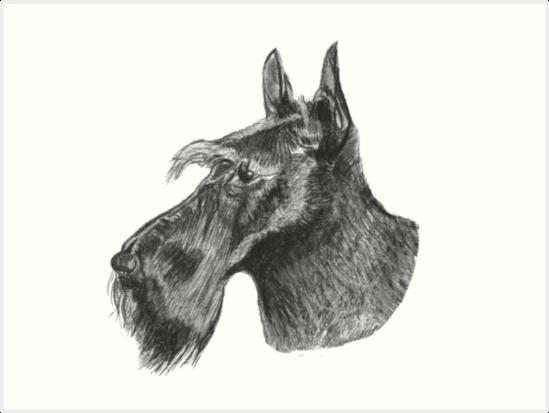 Láminas Artísticas Dibujo A Lápiz De Perro Yorkshire Terrier De