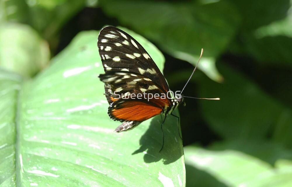 Butterfly on leaf by Sweetpea06