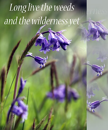 Long Live The Weeds and The Wilderness by simpsonvisuals