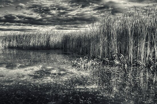 Reeds and Reflections by Aaron Campbell