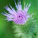 Thistle by Tracy Riddell