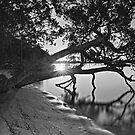 Last light Mono by bazcelt