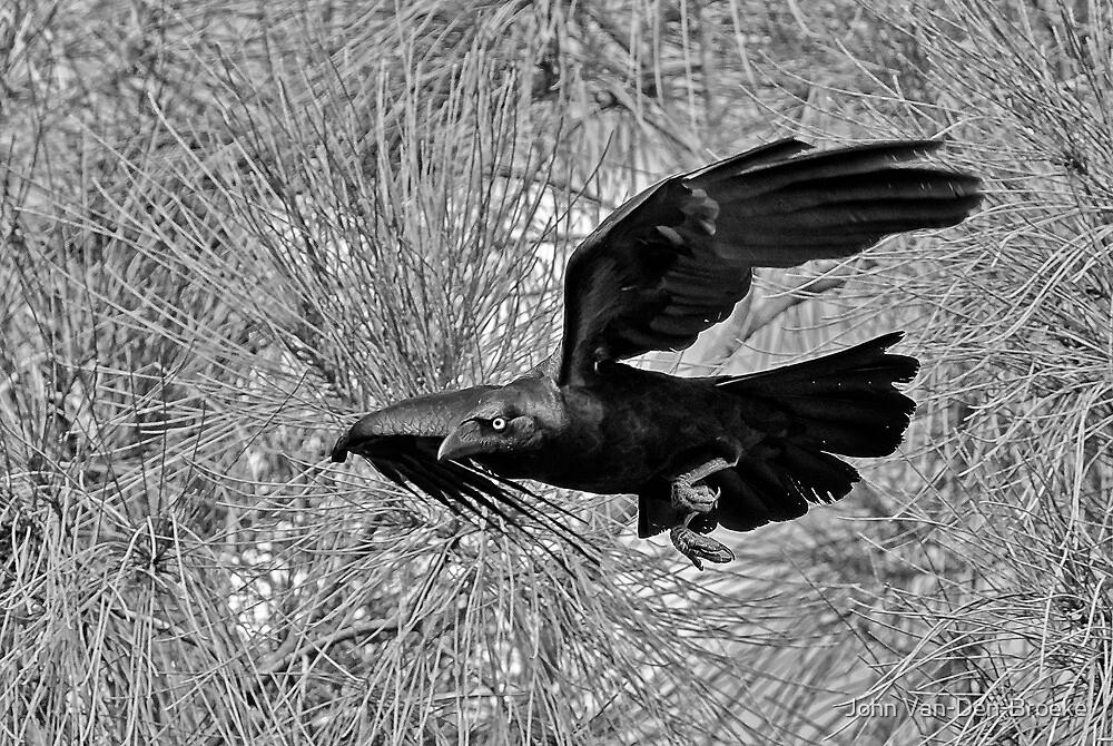 Crow by John Van-Den-Broeke