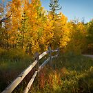 Fall Along The Fence by Joey Bouchard Photography
