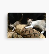 RENAISSANCE CATS Canvas Print
