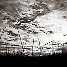 The Sky by Vincent Riedweg