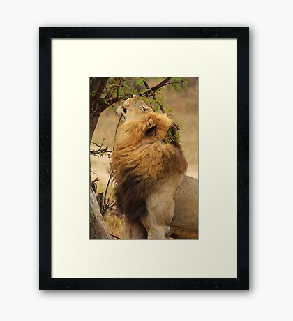 Laying claim Framed Print