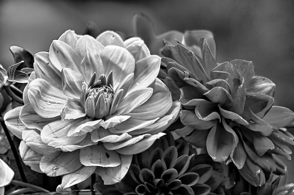 Dahlias by Eunice Gibb