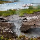 Hotsprings, Lake Bogoria, Kenya by Neville Jones
