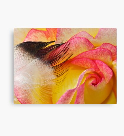 Touch a Rose Canvas Print