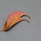 Two Pink Leaves on Cement by Jane Underwood