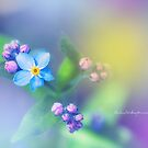 ForgetMeNot by Andreas Stridsberg
