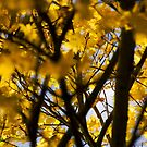 Turning Leaves, Emberton, UK by strangelight