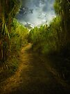 The Path by Elaine  Manley