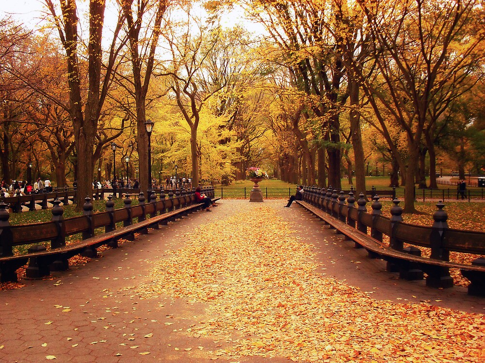 Quot Autumn Romance Central Park Quot By Vivienne Gucwa Redbubble