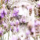 Lady in Lavander by Alice Prior