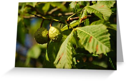 Horse Chestnuts in Autumn by Rob Goforth