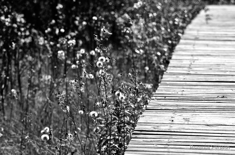 Boardwalk by Roxanne Persson