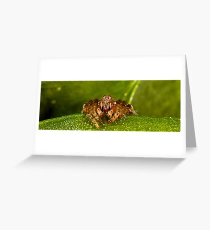 Dolophones sp. Greeting Card