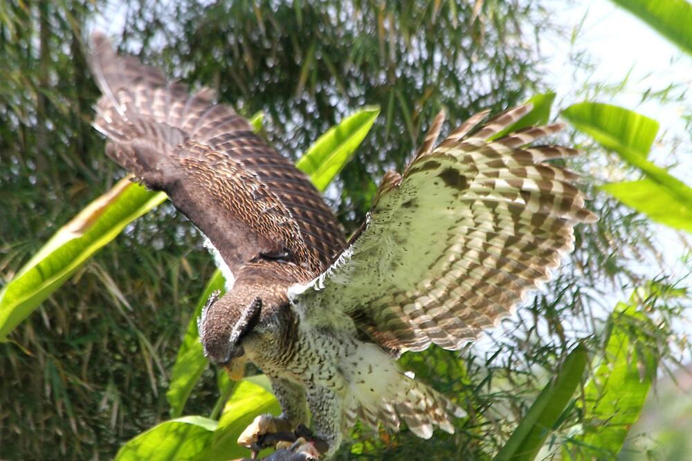 Wings Wide by byronbackyard