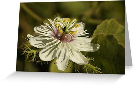 Flower Wheel by beeden