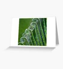 Cycad Frons, Mission Beach, FNQ Greeting Card
