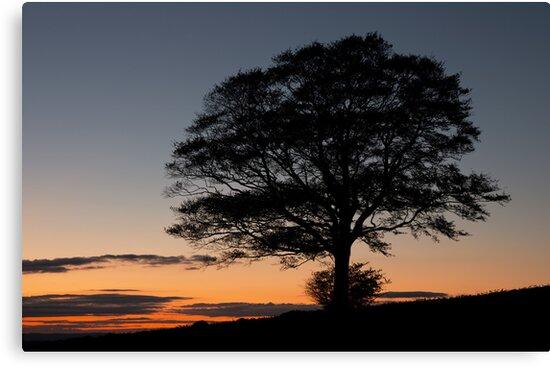 Last light tree silhouette by peteton