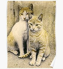 Alley Cats Poster