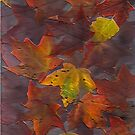 Autumn leaves... natures gift to me... by linmarie