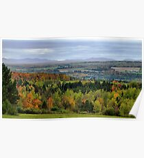 Evergreen Trees nestled among colorful Fall Trees Poster