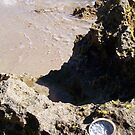 Oyster At Mermaid's Pool 23 09 12 by Robert Phillips