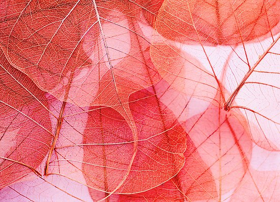 fragile by Ingrid Beddoes