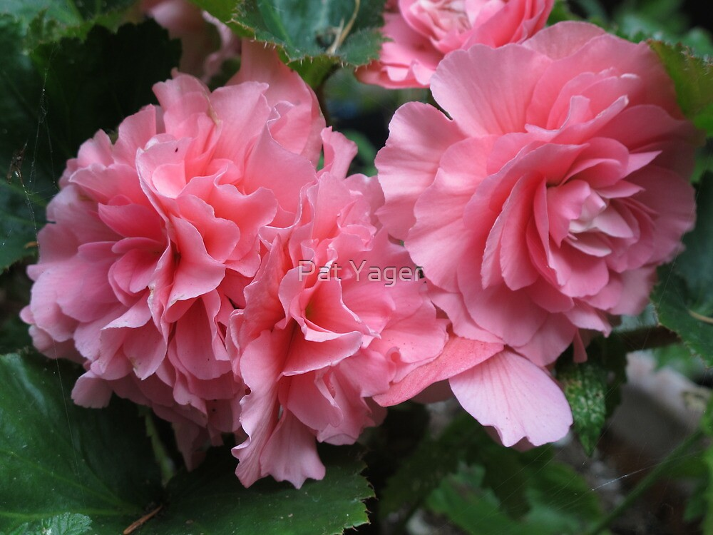 Pink in September by Pat Yager
