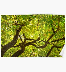 Color Tree Poster