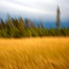 Mountain Meadow Impressions by Kim Barton