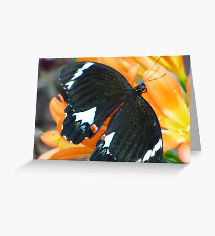 Butterfly on Clivea Flower  Greeting Card