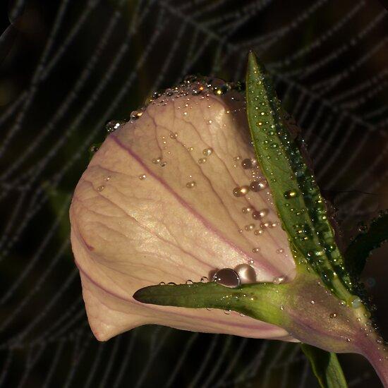 Sparkling Dew Drops by Victoria Jostes