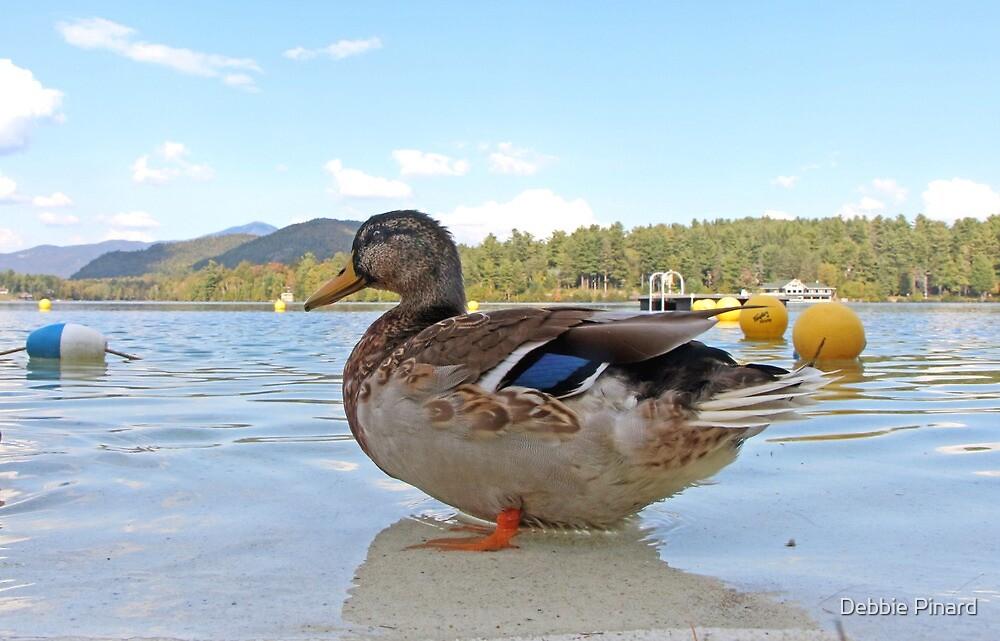 Duck!  Lake Placid New York by Debbie Pinard