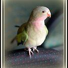 My Princess Kate - princess parrot by lettie1957