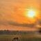 Animals and Sunset/Sun Rises