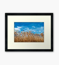 Field of grasses waving in the breeze Framed Print