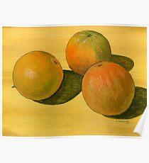 Three organic oranges Poster