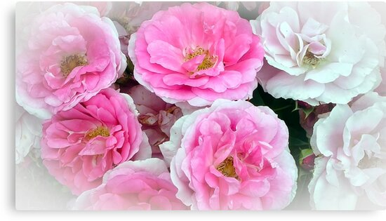 A Bunch of Pink and White Roses by Chantal PhotoPix