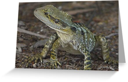 Junior Water Dragon by stevealder